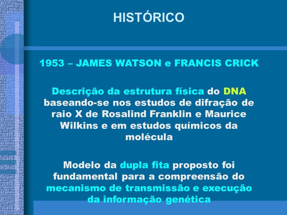 HISTÓRICO 1941 – BEADLE e TATUM Demonstraram que os genes agiam através da regulação de diferentes eventos químicos HIPÓTESE: UM GENE UMA ENZIMA