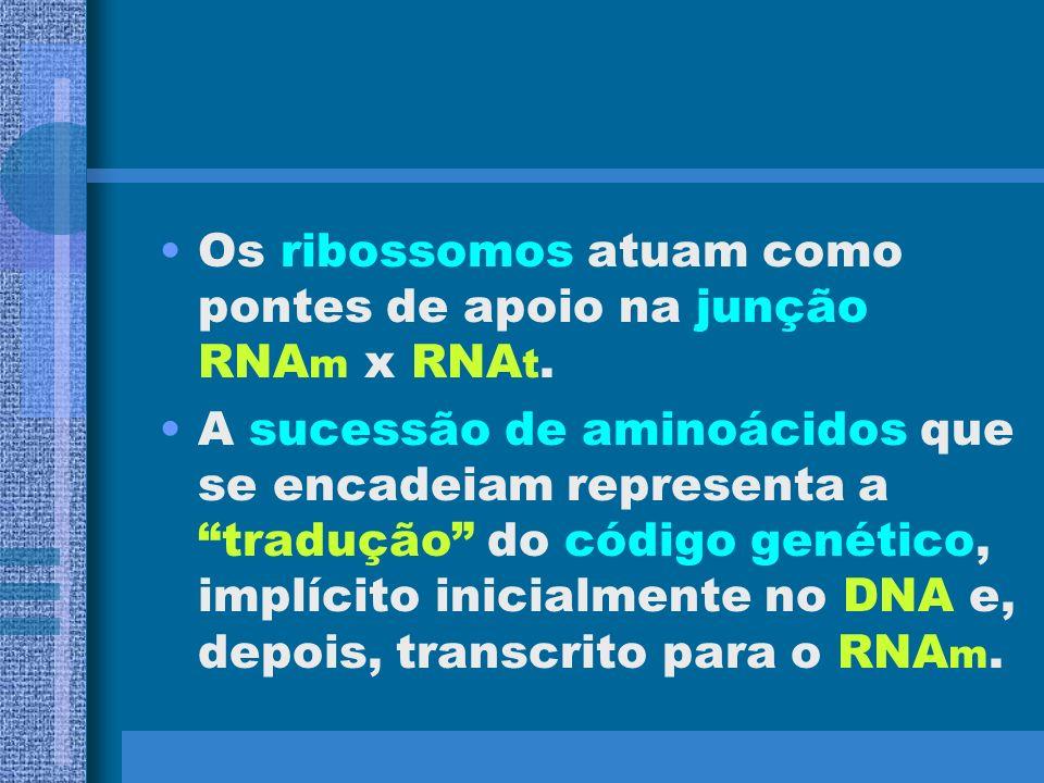 TRANSCRIÇÃO E TRADUÇÃO DO CÓDIGO GENÉTICO O código de bases nitrogenadas do DNA é transcrito para um RNA m. O RNA m passa para o citoplasma e recebe o