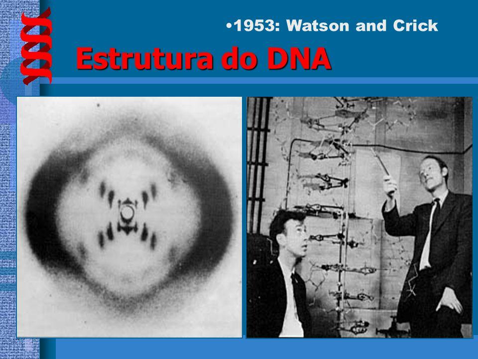 HISTÓRICO 1953 – JAMES WATSON e FRANCIS CRICK Descrição da estrutura física do DNA baseando-se nos estudos de difração de raio X de Rosalind Franklin