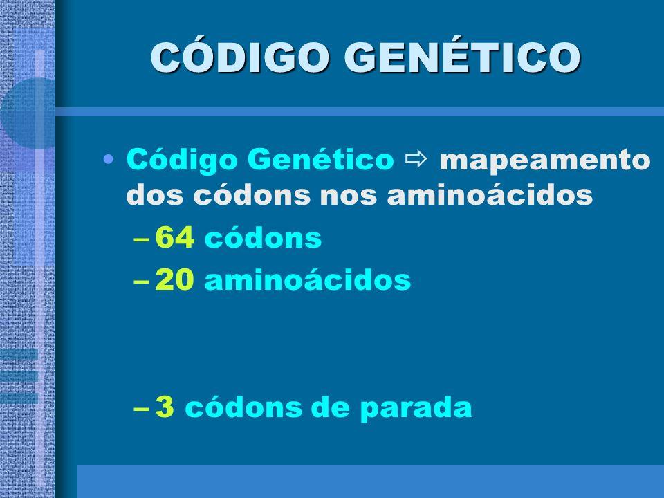 * o nº de códons indica o nº de aminoácidos; * os tipos de códons indicam os tipos de aminoácidos; * a sequência de códons indica a sequência de amino