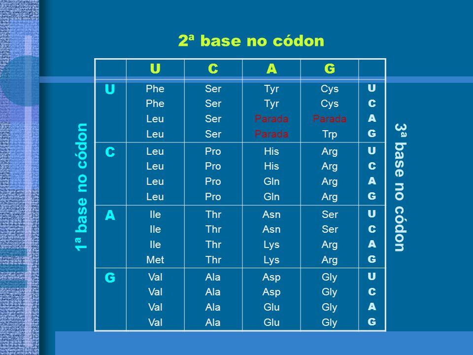 CÓDIGO GENÉTICO Código Genético mapeamento dos códons nos aminoácidos –64 códons –20 aminoácidos –3 códons de parada
