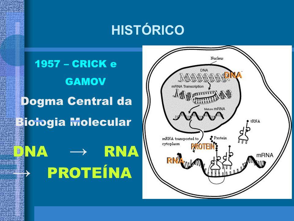 HISTÓRICO 1955 – JOE HIN TJIO Definiu como 46 o número exato de cromossomos humanos ARTHUR KORNBERG Isolou a enzima DNA polimerase da bactéria E. coli