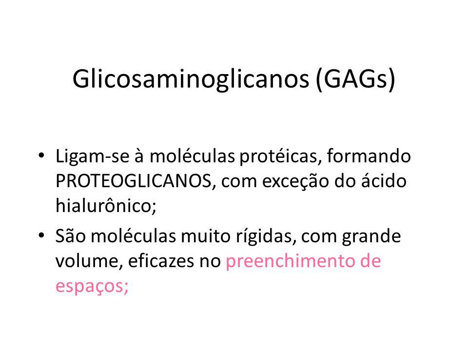Glicosaminoglicanos (GAGs) Ligam-se à moléculas protéicas, formando PROTEOGLICANOS, com exceção do ácido hialurônico; São moléculas muito rígidas, com grande volume, eficazes no preenchimento de espaços;