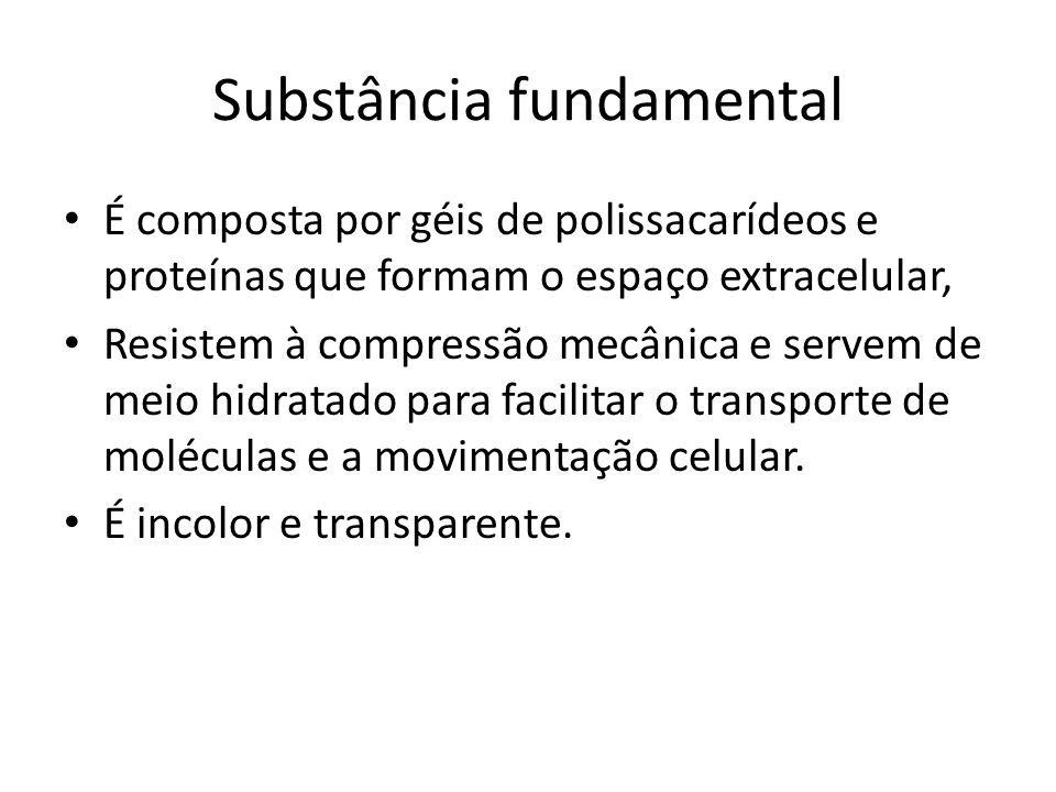 Substância fundamental É composta por géis de polissacarídeos e proteínas que formam o espaço extracelular, Resistem à compressão mecânica e servem de meio hidratado para facilitar o transporte de moléculas e a movimentação celular.