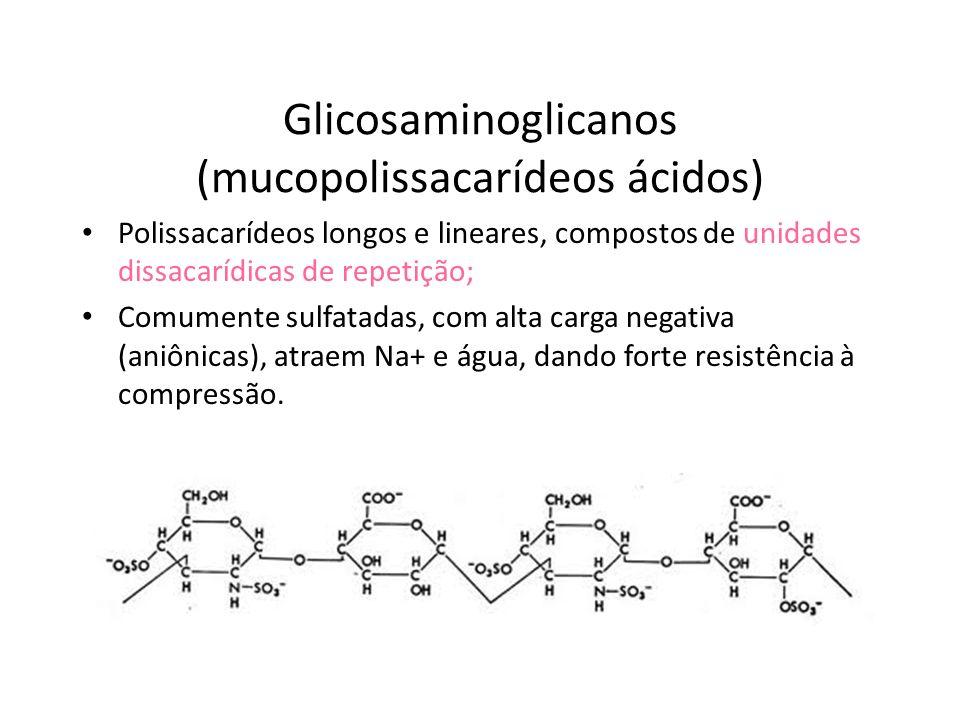 Glicoproteínas A.