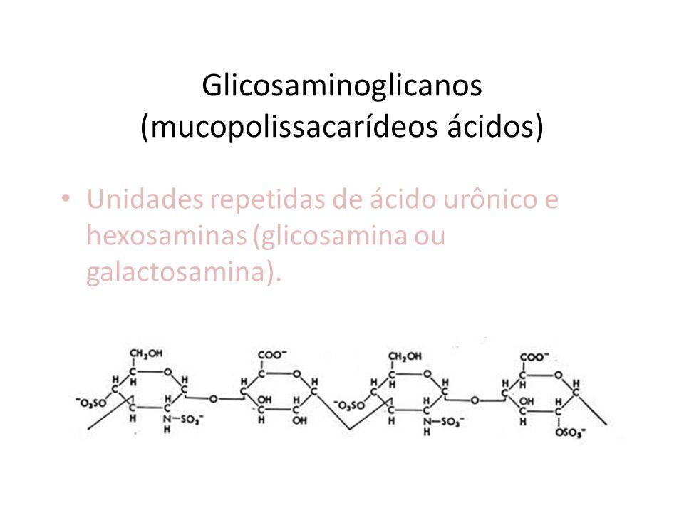 Glicosaminoglicanos (mucopolissacarídeos ácidos) Unidades repetidas de ácido urônico e hexosaminas (glicosamina ou galactosamina).