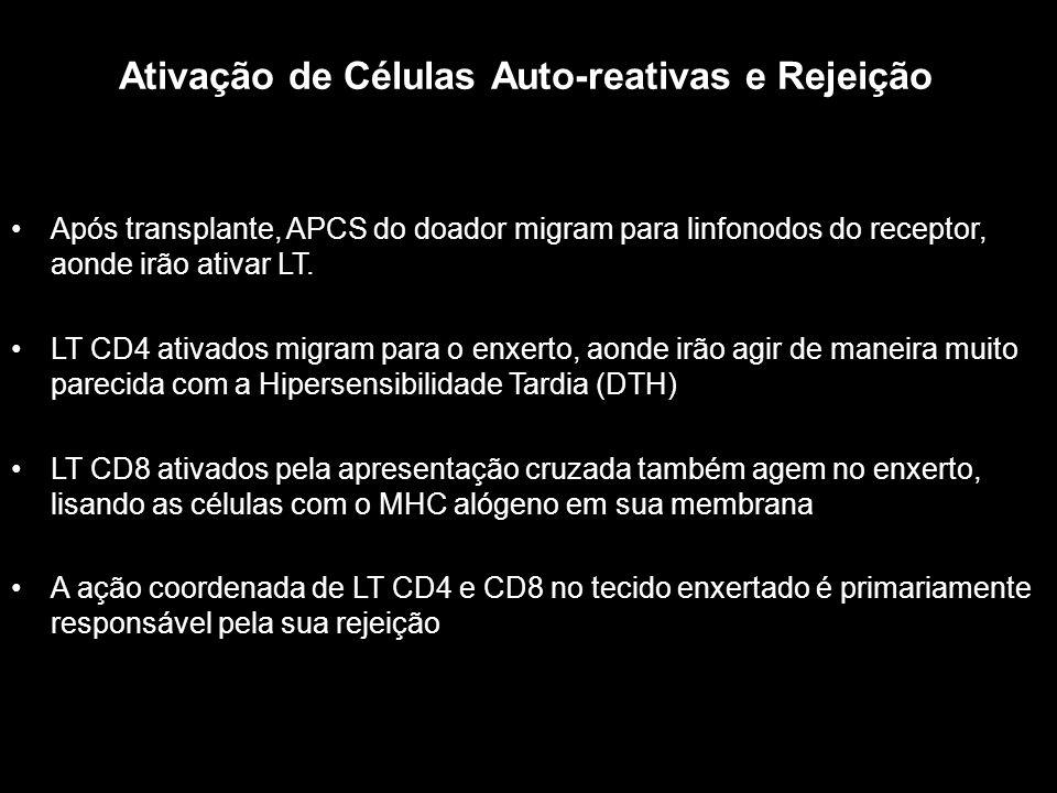 Ativação de Células Auto-reativas e Rejeição Figura 10-1 Após transplante, APCS do doador migram para linfonodos do receptor, aonde irão ativar LT. LT