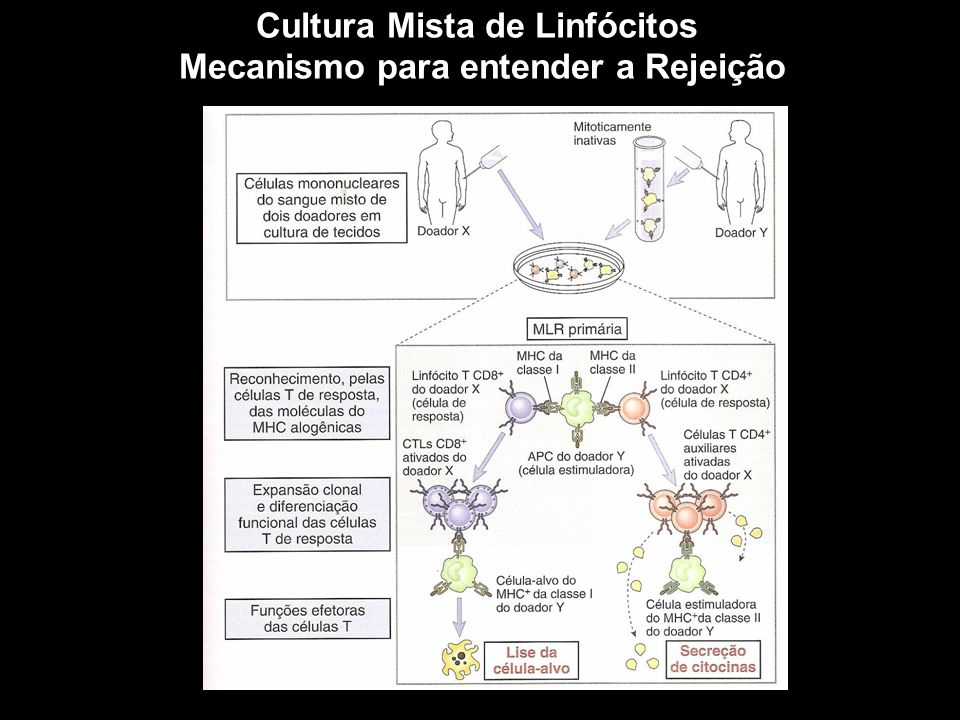 Cultura Mista de Linfócitos Mecanismo para entender a Rejeição Figura 10-1