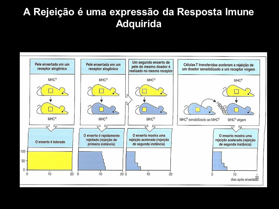 Tratamento das Rejeições Agente Imunossupressores Figura 10-1