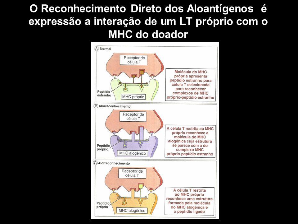 O Reconhecimento Indireto dos Aloantígenos pode ocorrer pelo reconhecimento de MHCs ou outros antígenos Figura 10-1 O MHC do doador é potencialmente um antígeno para o receptor – pode ser processado por APCs do doador e apresentado para LT alorreativos Dessa forma ocorre apresentação para LT CD4 e conseqüente ativação destes LT CD8 também são ativados por Apresentação Cruzada MHC I Antígenos que não MHC – Antígenos de Histocompatibilidade Secundários ou Menores – também podem estar envolvidos nessa reação – Antígenos que geralmente são tolerizados no doador, mas não no receptor