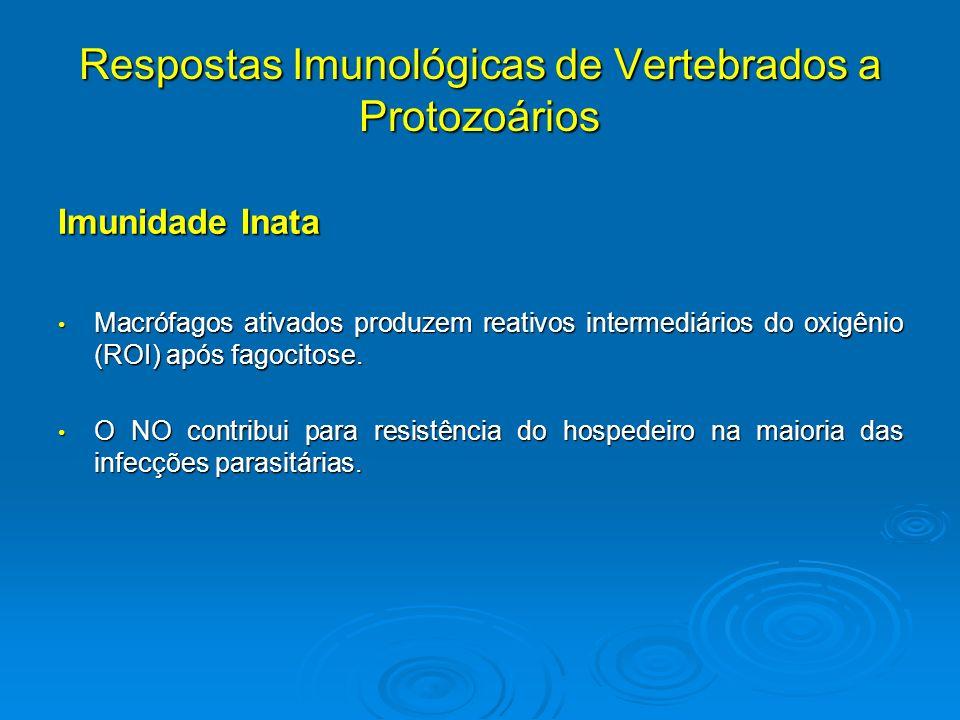 Respostas Imunológicas de Vertebrados a Protozoários Imunidade Inata Macrófagos ativados produzem reativos intermediários do oxigênio (ROI) após fagoc
