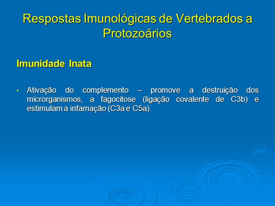 Respostas Imunológicas de Vertebrados a Protozoários Imunidade Inata Ativação do complemento – promove a destruição dos microrganismos, a fagocitose (
