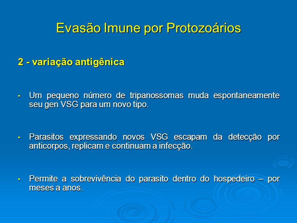 Evasão Imune por Protozoários 2 - variação antigênica Um pequeno número de tripanossomas muda espontaneamente seu gen VSG para um novo tipo. Um pequen