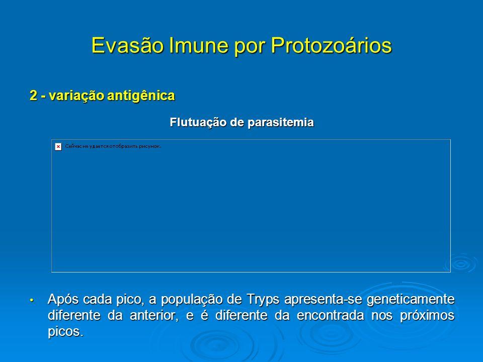 Evasão Imune por Protozoários 2 - variação antigênica Flutuação de parasitemia Após cada pico, a população de Tryps apresenta-se geneticamente diferen