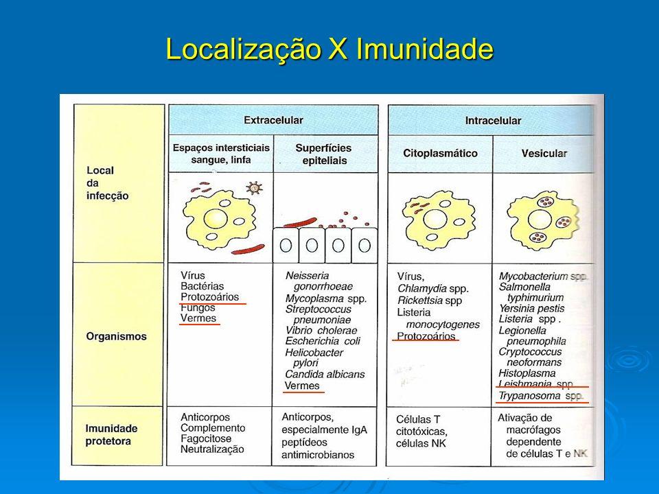 Imunidade a Protozoários Principais protozoários causadores de doenças: Plasmodium, Trypanossoma, Toxoplasma, Leishmania (humanos e animais).