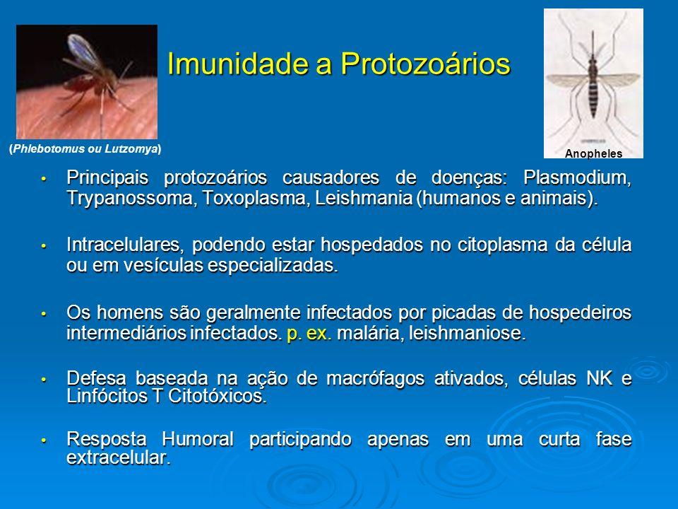 Imunidade a Protozoários Principais protozoários causadores de doenças: Plasmodium, Trypanossoma, Toxoplasma, Leishmania (humanos e animais). Principa