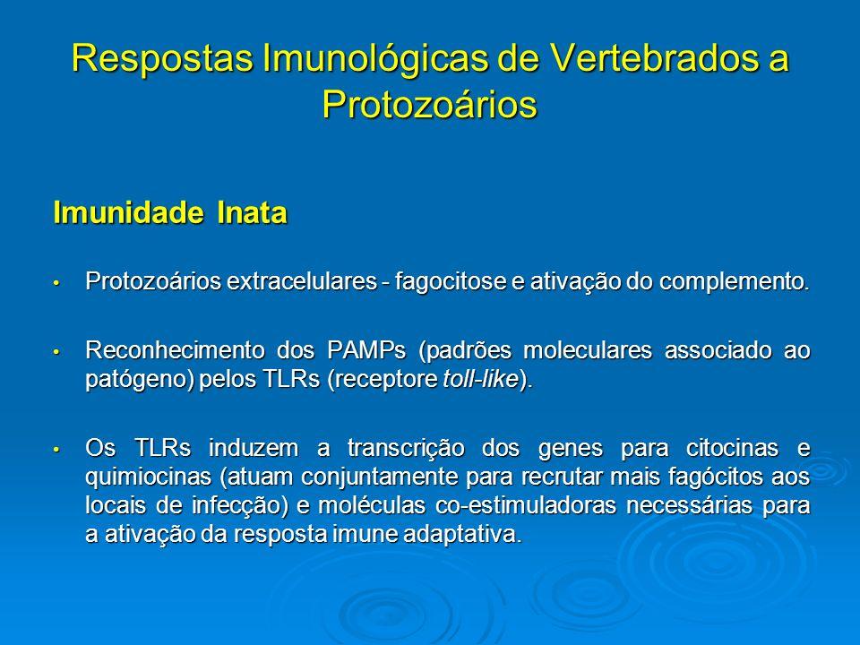 Respostas Imunológicas de Vertebrados a Protozoários Imunidade Inata Protozoários extracelulares - fagocitose e ativação do complemento. Protozoários