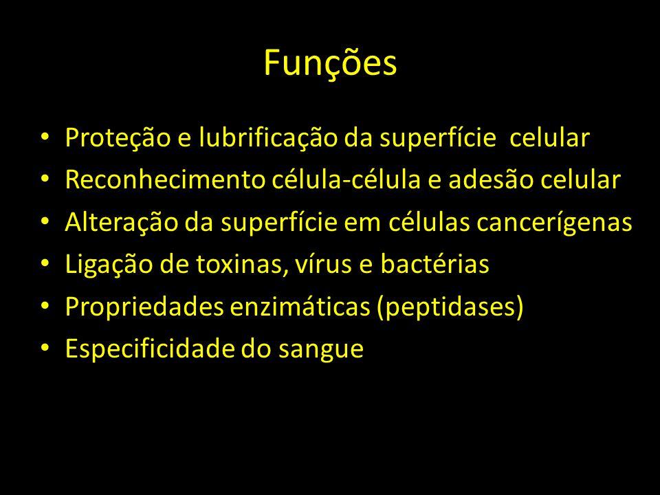 Funções Proteção e lubrificação da superfície celular Reconhecimento célula-célula e adesão celular Alteração da superfície em células cancerígenas Li