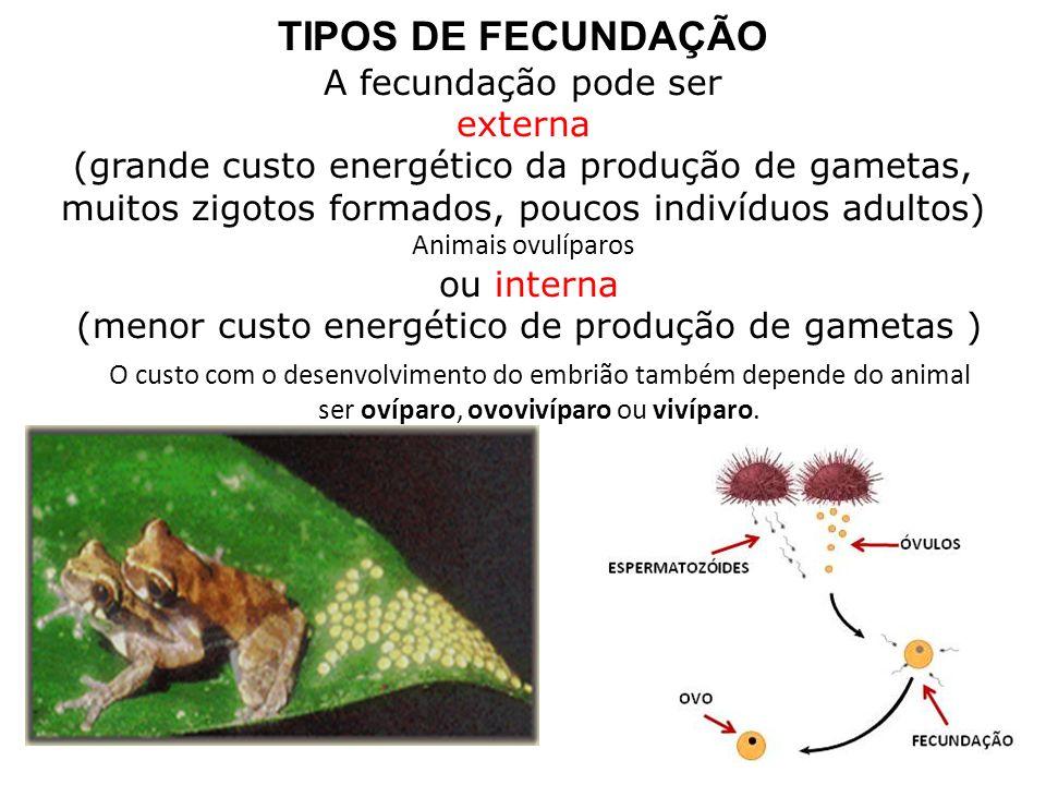 TIPOS DE FECUNDAÇÃO A fecundação pode ser externa (grande custo energético da produção de gametas, muitos zigotos formados, poucos indivíduos adultos)