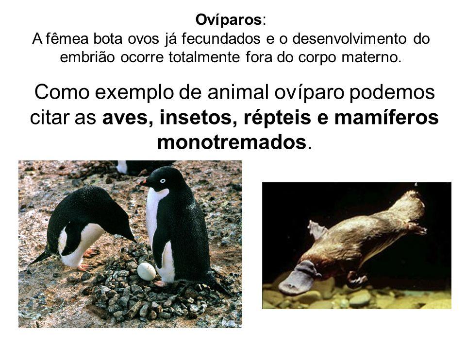 Ovíparos: A fêmea bota ovos já fecundados e o desenvolvimento do embrião ocorre totalmente fora do corpo materno. Como exemplo de animal ovíparo podem