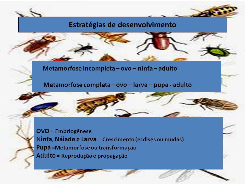 Estratégias de desenvolvimento Metamorfose incompleta – ovo – ninfa – adulto Metamorfose completa – ovo – larva – pupa - adulto OVO = Embriogênese Nin