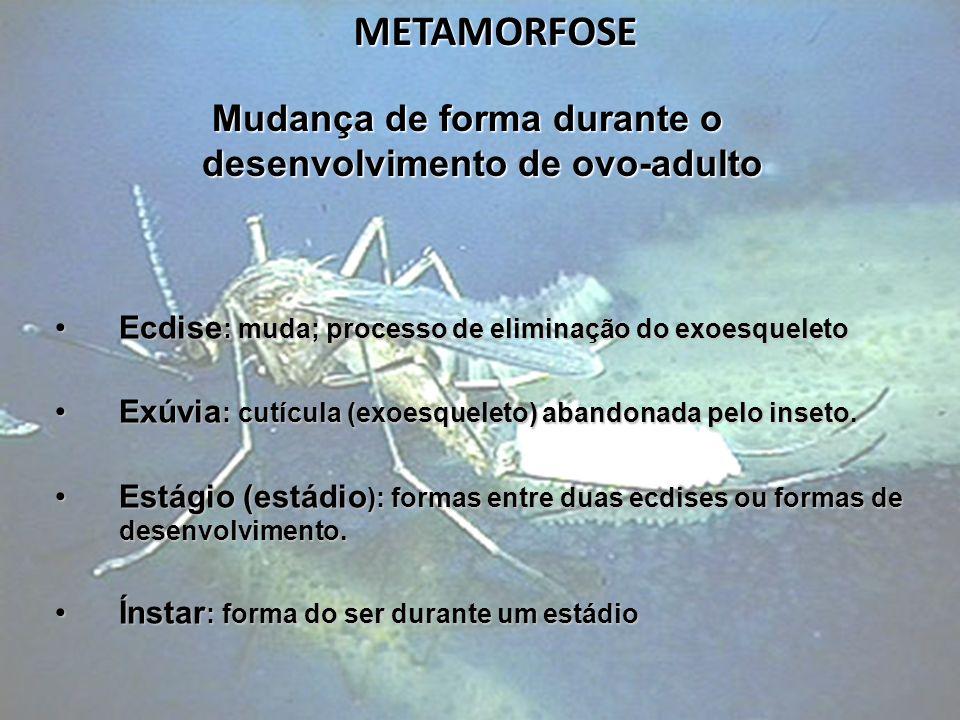METAMORFOSE Ecdise : muda; processo de eliminação do exoesqueletoEcdise : muda; processo de eliminação do exoesqueleto Exúvia : cutícula (exoesqueleto