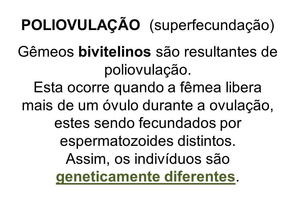 POLIOVULAÇÃO (superfecundação) Gêmeos bivitelinos são resultantes de poliovulação. Esta ocorre quando a fêmea libera mais de um óvulo durante a ovulaç
