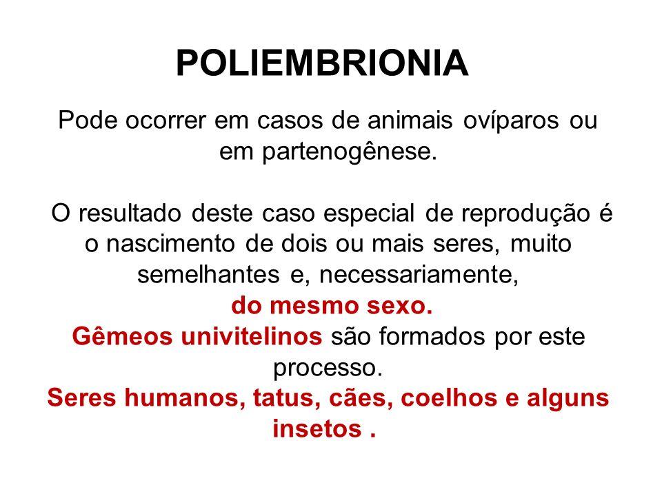 POLIEMBRIONIA Pode ocorrer em casos de animais ovíparos ou em partenogênese. O resultado deste caso especial de reprodução é o nascimento de dois ou m