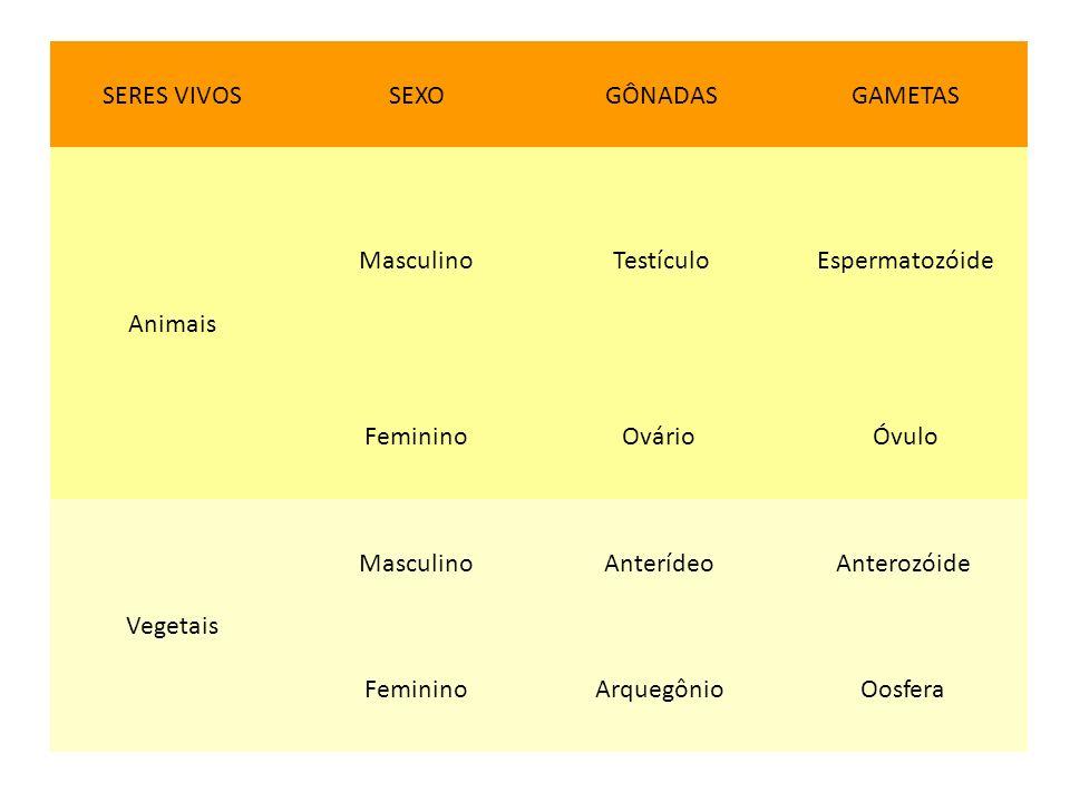 SERES VIVOSSEXOGÔNADASGAMETAS Animais MasculinoTestículoEspermatozóide FemininoOvário Óvulo Vegetais MasculinoAnterídeo Anterozóide FemininoArquegônio