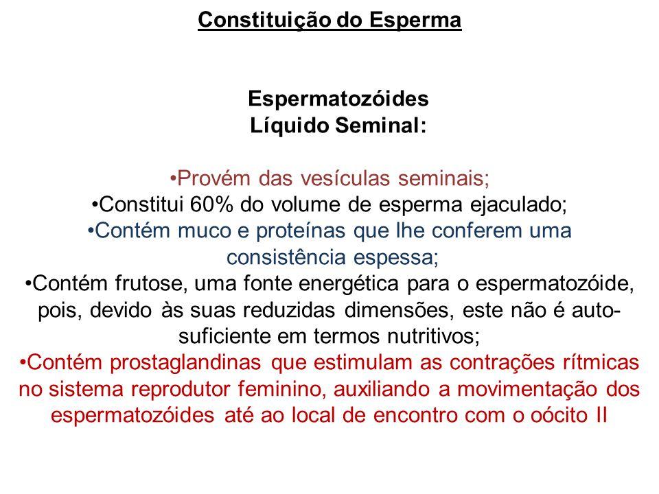 Constituição do Esperma Espermatozóides Líquido Seminal: Provém das vesículas seminais; Constitui 60% do volume de esperma ejaculado; Contém muco e pr