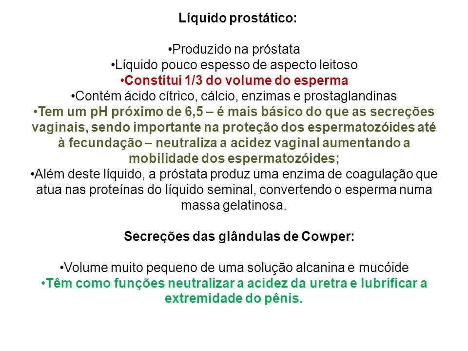 Líquido prostático: Produzido na próstata Líquido pouco espesso de aspecto leitoso Constitui 1/3 do volume do esperma Contém ácido cítrico, cálcio, en