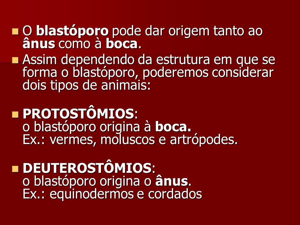O blastóporo pode dar origem tanto ao ânus como à boca. O blastóporo pode dar origem tanto ao ânus como à boca. Assim dependendo da estrutura em que s