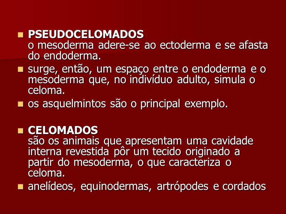PSEUDOCELOMADOS o mesoderma adere-se ao ectoderma e se afasta do endoderma. PSEUDOCELOMADOS o mesoderma adere-se ao ectoderma e se afasta do endoderma