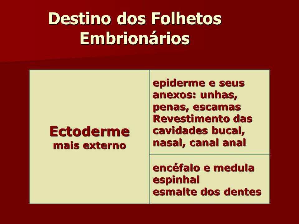 Destino dos Folhetos Embrionários Ectoderme mais externo epiderme e seus anexos: unhas, penas, escamas Revestimento das cavidades bucal, nasal, canal