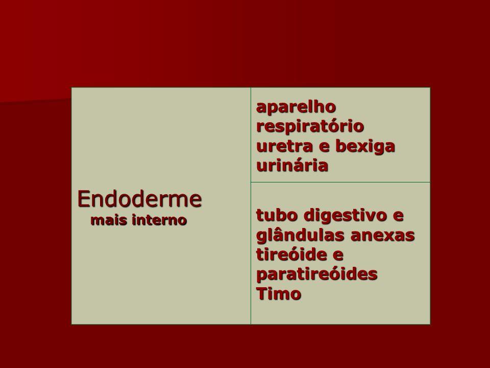 Endoderme mais interno mais interno aparelho respiratório uretra e bexiga urinária tubo digestivo e glândulas anexas tireóide e paratireóides Timo