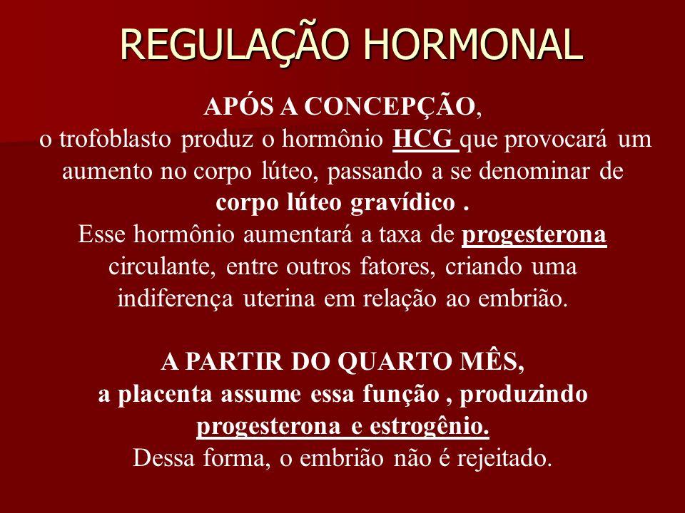 REGULAÇÃO HORMONAL APÓS A CONCEPÇÃO, o trofoblasto produz o hormônio HCG que provocará um aumento no corpo lúteo, passando a se denominar de corpo lút