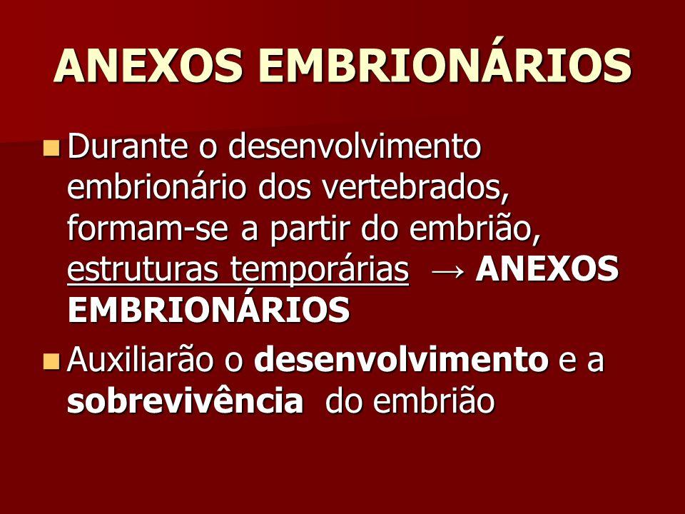 ANEXOS EMBRIONÁRIOS Durante o desenvolvimento embrionário dos vertebrados, formam-se a partir do embrião, estruturas temporárias ANEXOS EMBRIONÁRIOS D