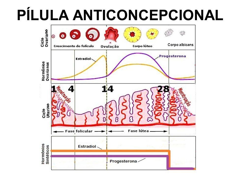 PÍLULA ANTICONCEPCIONAL Corpo albicans