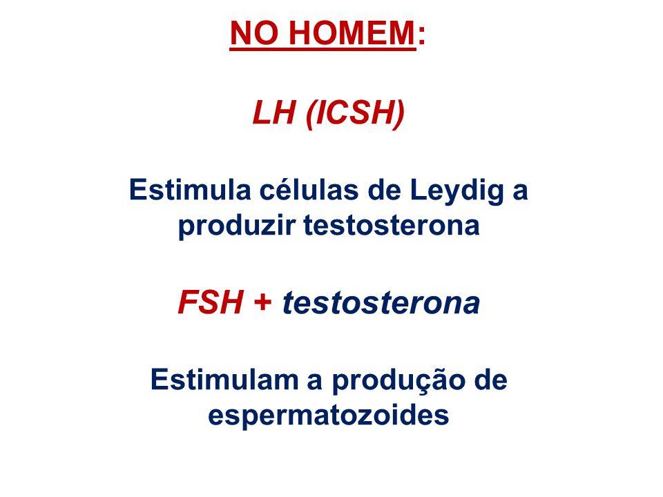 NO HOMEM: LH (ICSH) Estimula células de Leydig a produzir testosterona FSH + testosterona Estimulam a produção de espermatozoides