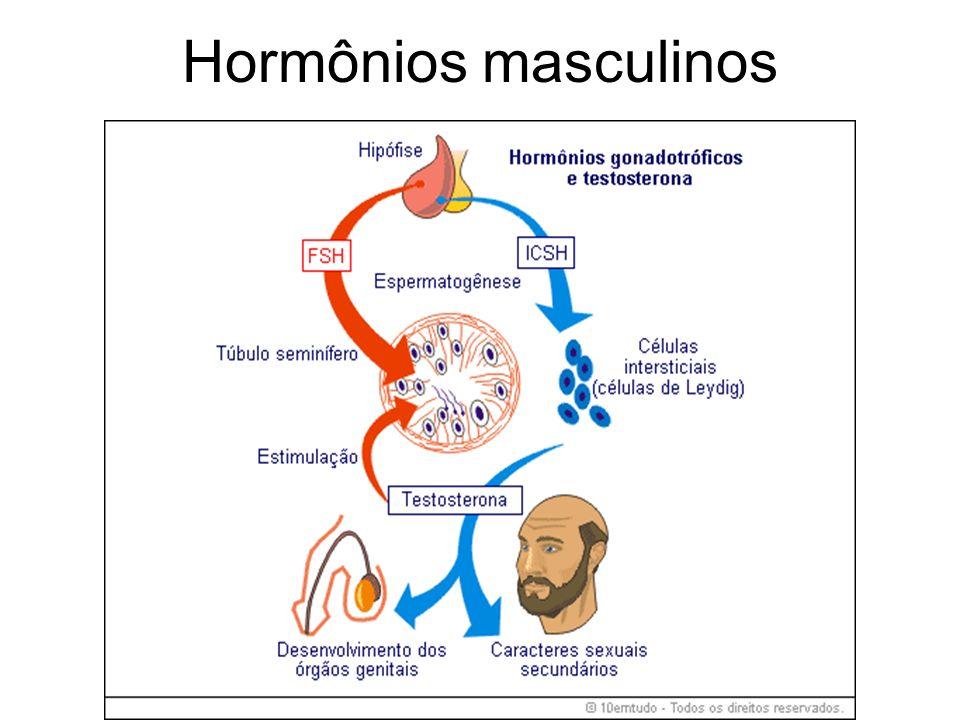 Durante a sétima semana de vida embrionária a testosterona já começa a ser produzida pelos testículos, induzida pelo cromossomo masculino que estimula a testosterona a ser secretada pela crista genital e posteriormente pelo testículo fetal para executar as seguintes funções: A testosterona estimula no feto o desenvolvimento do pênis, bolsa escrotal e etc...