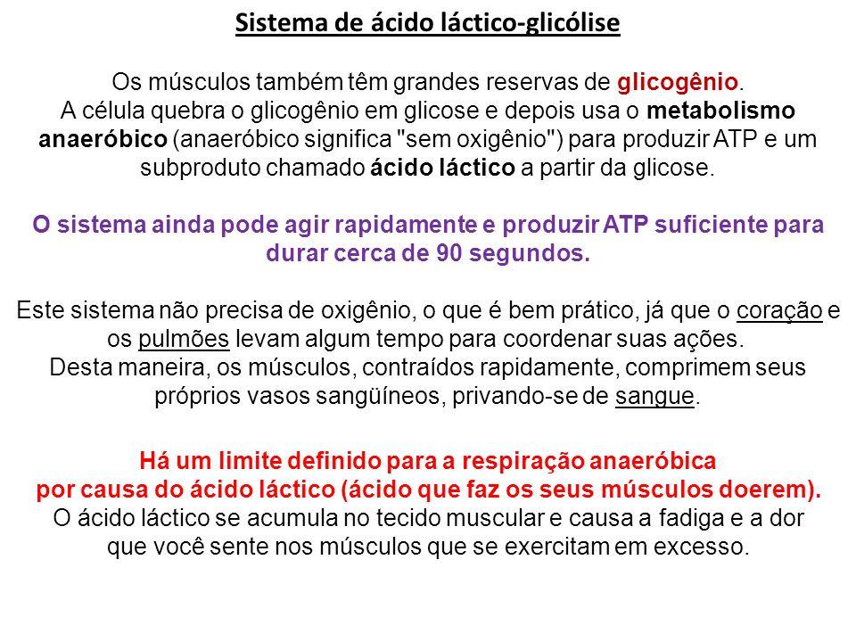 Sistema de ácido láctico-glicólise Os músculos também têm grandes reservas de glicogênio. A célula quebra o glicogênio em glicose e depois usa o metab