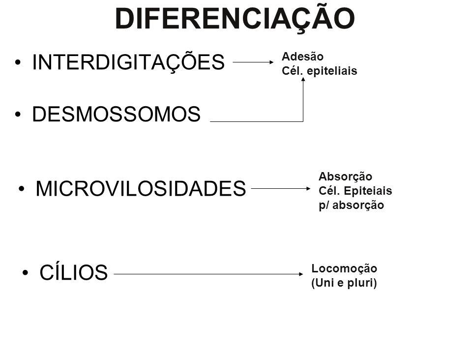 Características – Epitélio Células geralmente poliédricas (justapostas). Pouca / nenhuma substância intercelular (intersticial) Funções: - revestiment