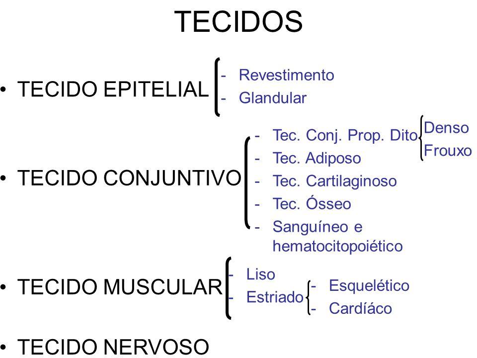 TECIDOS TECIDO EPITELIAL TECIDO CONJUNTIVO TECIDO MUSCULAR TECIDO NERVOSO -Revestimento -Glandular -Tec.