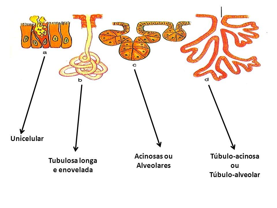 Merócrinas Holócrinas Apócrinas Ex: gl. sebácea Ex: cel calicif intestinal Ex: gl. mamária