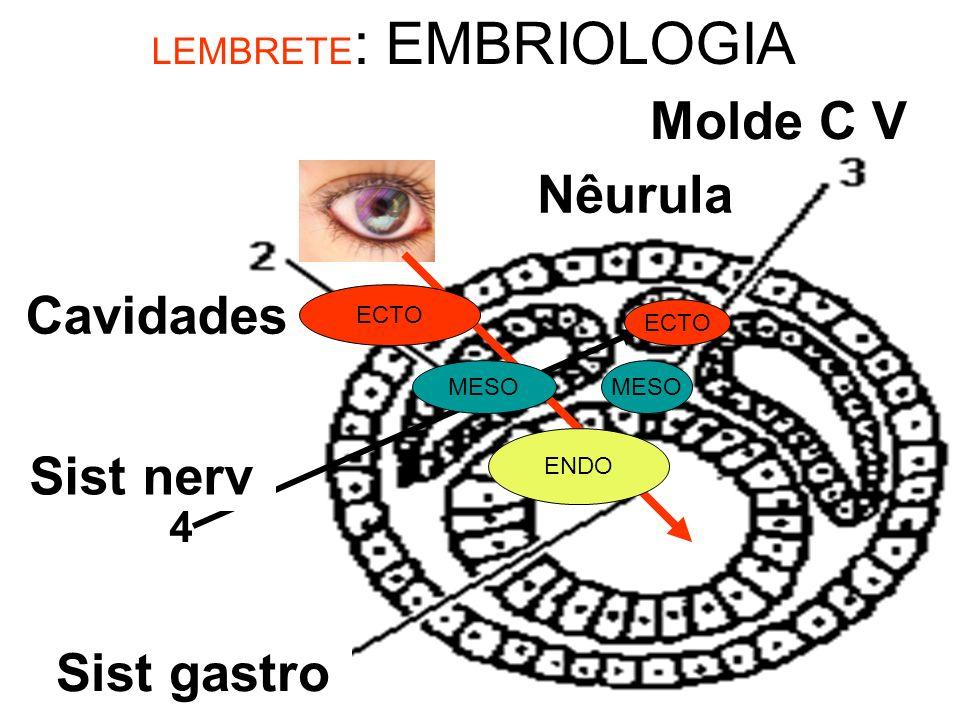 Notocorda Celoma Arquenteron 4 LEMBRETE : EMBRIOLOGIA Tubo Neural Nêurula