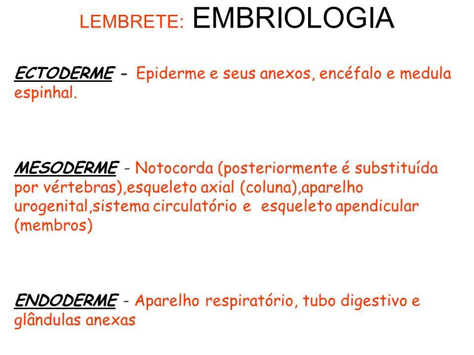 ECTODERME - Epiderme e seus anexos, encéfalo e medula espinhal.