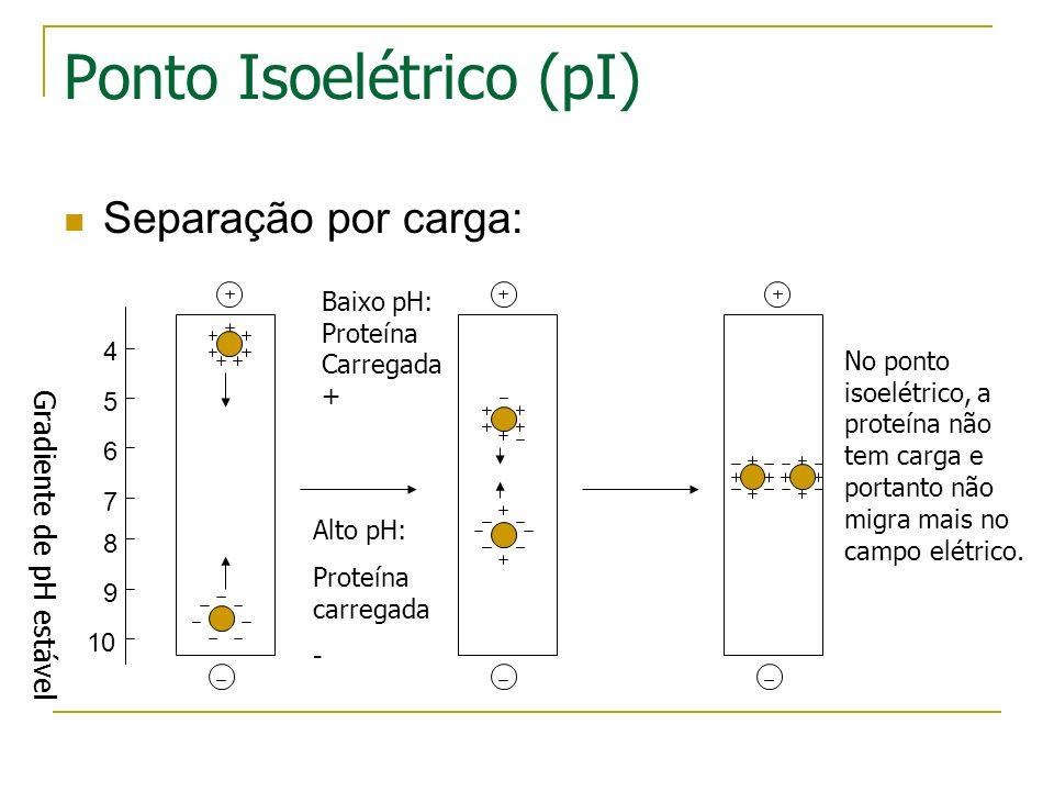 A primeira dimensão (separação por ponto isoelétrico) - Gel com um gradiente de pH imobilizado -Corrente elétrica leva proteínas carregadas a se mover