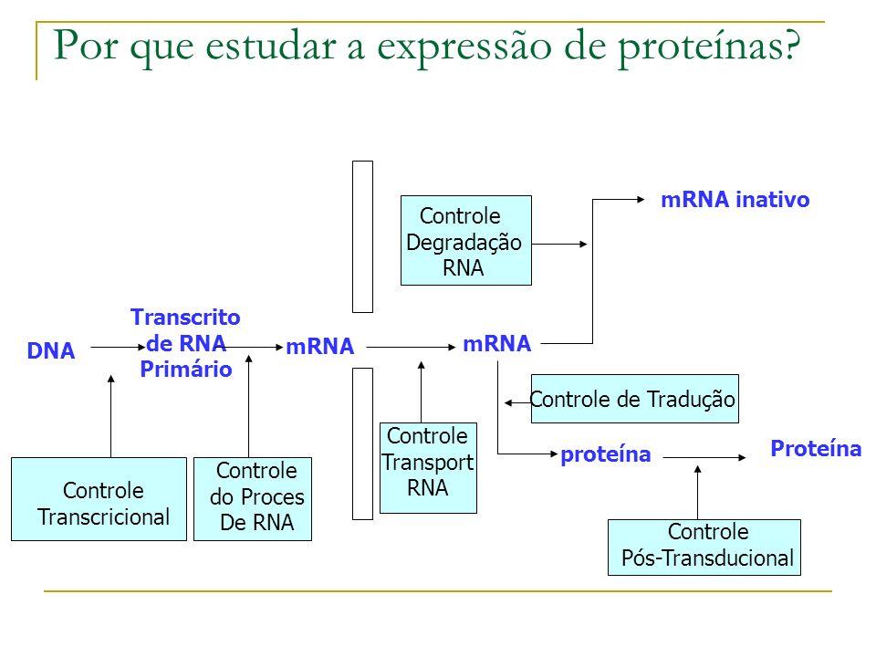 Vantagens vs Desvantagens Boa resolução para proteínas Detecção de modificações pós- transcricionais Não funciona bem para proteínas altamente hidrofóbicas Limitado pelo range de pH Difícil detecção de proteínas pouco abundantes Análise e quantificação sáo difíceis