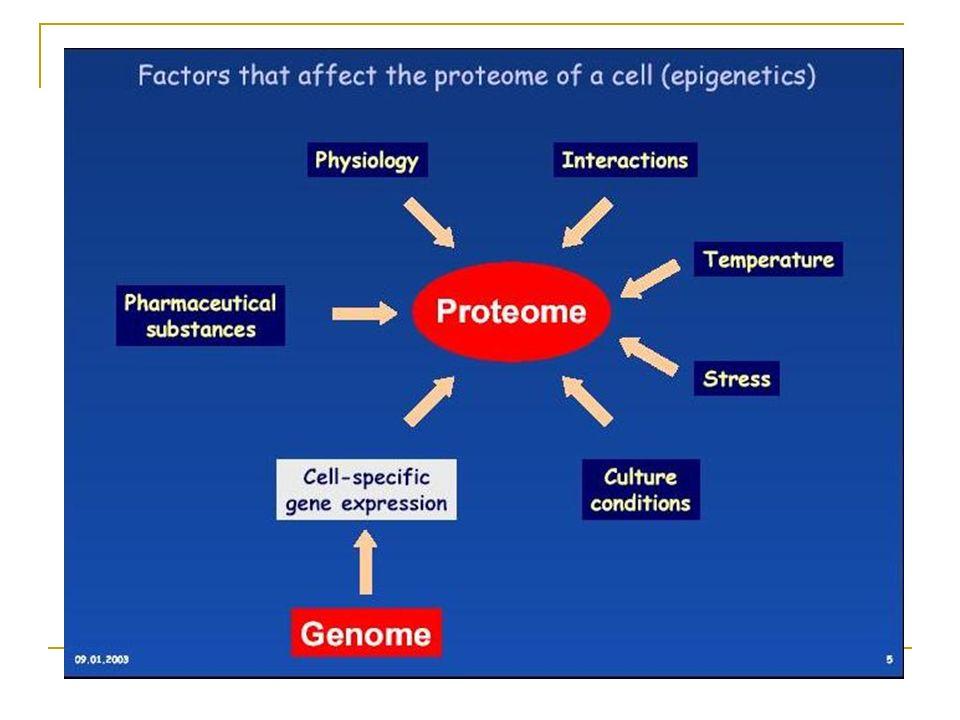 Por que estudar a expressão de proteínas? DNA Transcrito de RNA Primário mRNA proteína Proteína Controle Transcricional Controle do Proces De RNA Cont