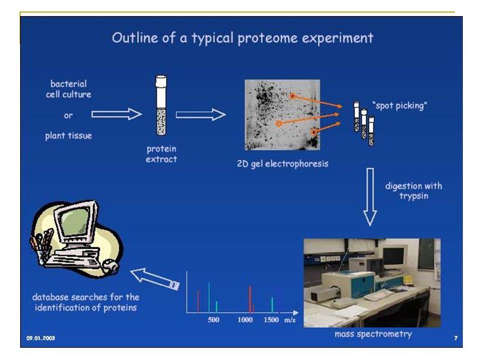 Introdução da amostra e Ionização Ionização direta ou via cromatografia para separação de componentes (HPLC, GC, eletroforese capilar) Ionização pode resultar em íons positivamente carregados (proteínas) ou negativamente carregados (sacarídeos e oligonucleotídeos)